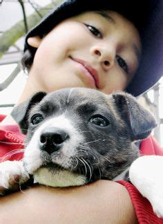 bojack puppies 1000 images about bojack on boston terriers mix and