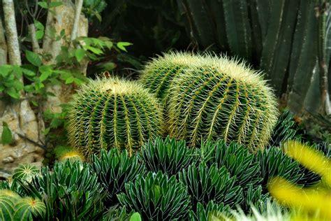 giardini e piante giardino con piante grasse fotogallery donnaclick