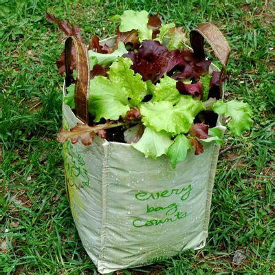vegetable garden containers cheap recycle your items for gardening house and
