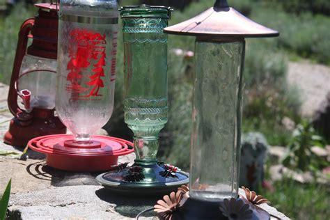 catahoulas hummingbirds bears oh my gnocchi no 9