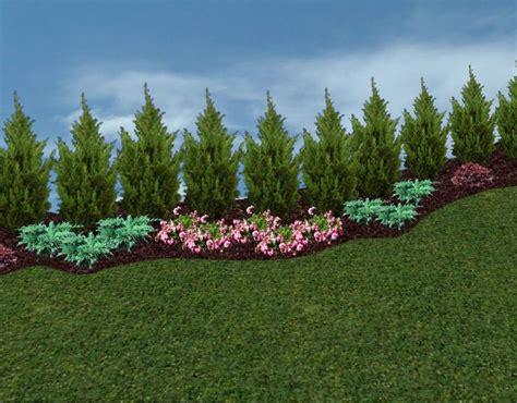 trees for backyard landscaping best 25 arborvitae landscaping ideas only on