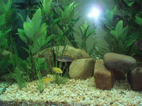 aquarium decor 5 popular styles for fish tanks decor ideasdecor ideas cheap aquarium decorations decor ideasdecor ideas