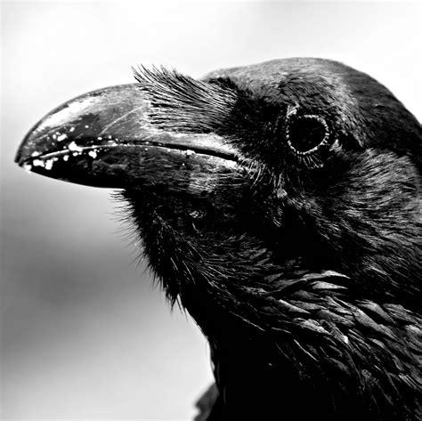 imagenes goticas el cuervo el cuervo edgar allan poe im 225 genes taringa