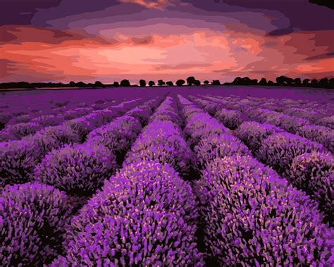 mahuaf  beautiful lavender flowers field diy painting