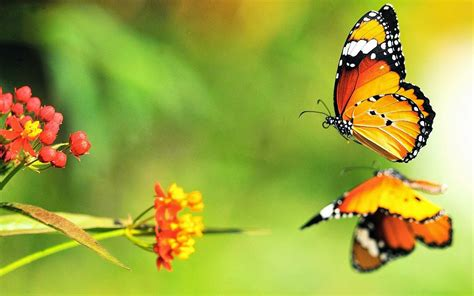 hd butterfly themes 3d butterfly desktop backgrounds wallpaper view