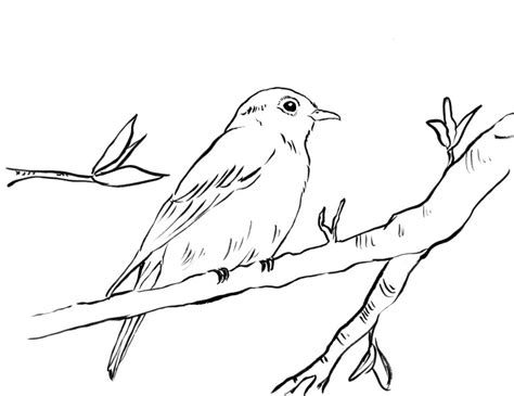 blue bird coloring pages sketch coloring page