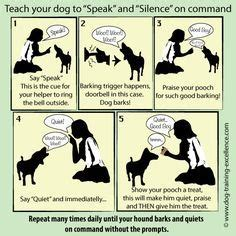 how to teach a to stop barking stop barking one counter intuitive way to stop excessive barking is to teach