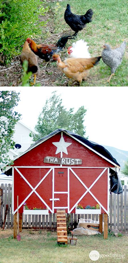 raising backyard chickens raising backyard chickens one good thing by jillee