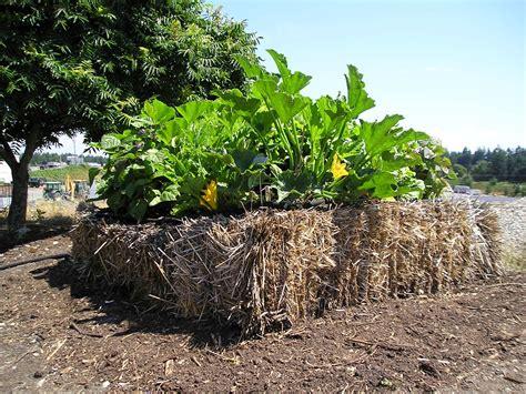 Straw Bale Planter by Two Gardening You Tried Straw Bale Gardening