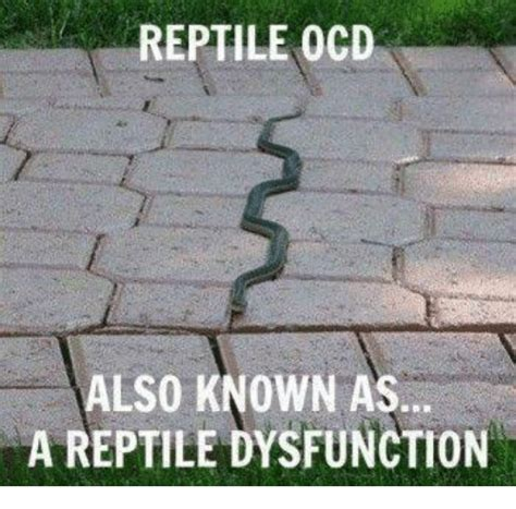 Reptile Memes - funny a reptile memes of 2016 on sizzle america