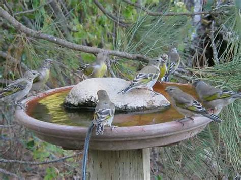 diy bird bath site with tips on where to put it in