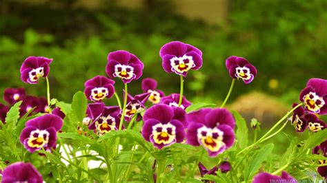 images of beautiful flowers most beautiful pictures of flowers