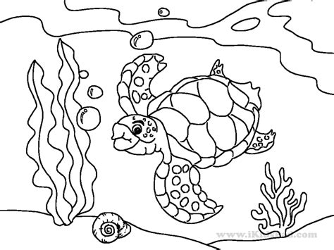 sea animals coloring pages free draw to color in faba me