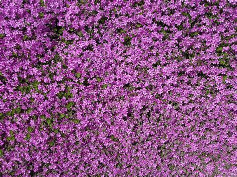 tappeto in inglese tappeto in inglese fabulous tappeto erboso artificiale