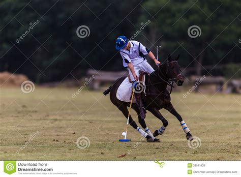 More Ponies For Polo by Polo Player Pony Editorial Photo Image