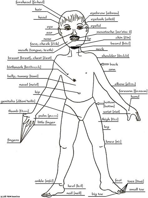 human body sections human body parts name www uocodac com
