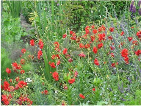 garden flower types jpg hi res 720p hd