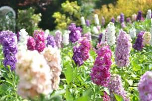 fleurs de jardin sauvage
