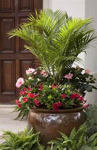 patio plants best 25 outdoor potted plants ideas on potted
