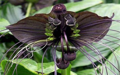 imagenes flores impresionantes 10 flores impresionantes que estan en vias de extincion