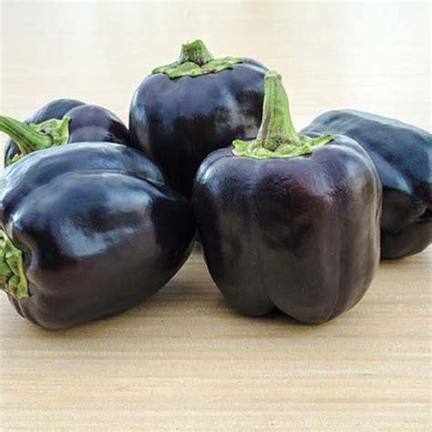 Benih Paprika Ungu paprika ungu 10benih purie garden