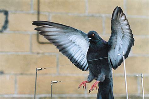 bird wire enviroguard