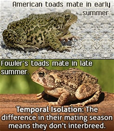 temporal isolation definition and exles