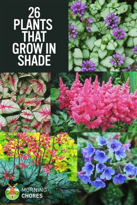 flowers for shade garden 1000 ideas about shade plants on shade garden