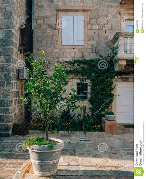 potare un limone in vaso albero di limone in vaso potatura limone come potare i