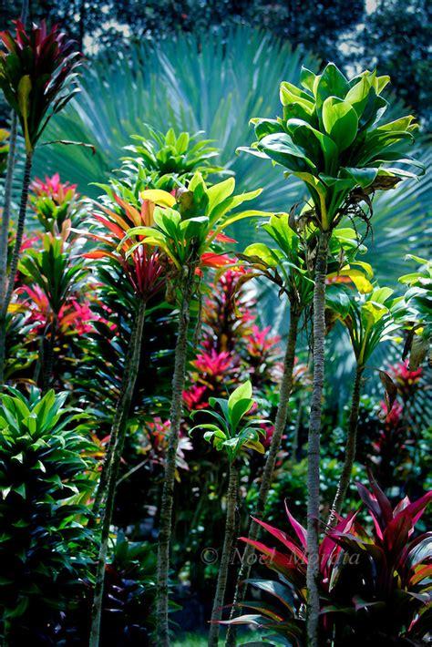 tropical plants for the garden hawaiian tropical gardens containing plants