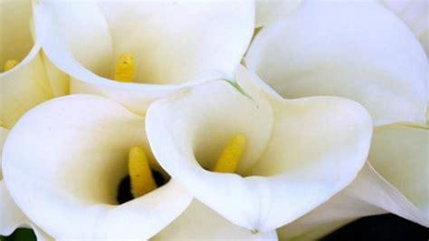 consegna fiori on line il servizio di consegna fiori per il giorno pi 249