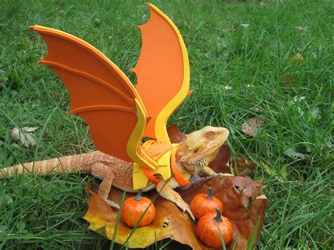 Pumpkin Halloween Costume Baby - pogona dragon pour halloween