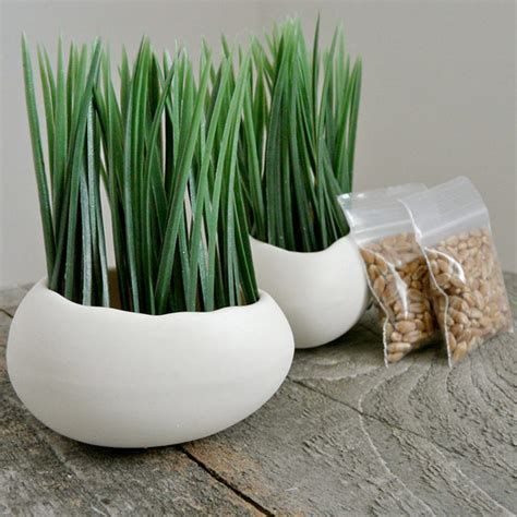 Wheat Grass Planters by Porcelain Egg Planter And Wheatgrass Kit