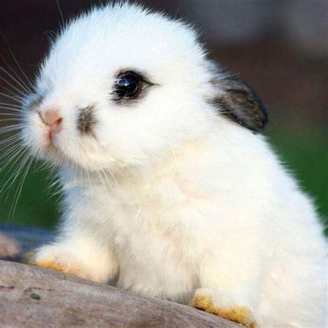 imagenes muy bonitas conejito blanco animales muy graciosos las maravillas