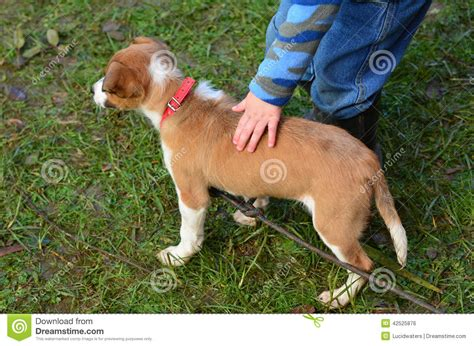 child pat  puppy dog stock photo image