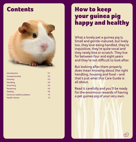 how to care for a guinea pig care guide