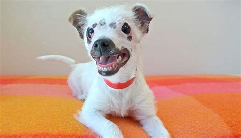 the lucky puppy looking puppy adopted by family who didn t care about scars