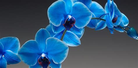 Beautiful Blue Orchid ? WeNeedFun
