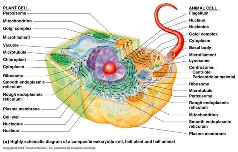 cells   biochemistry