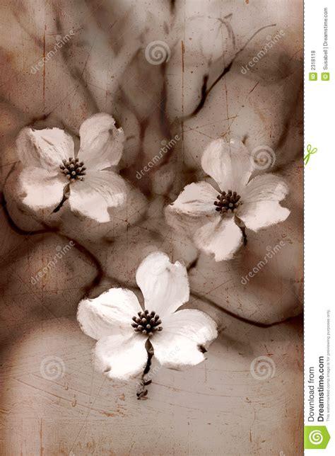 imagenes artisticas para niños flores art 237 sticas del dogwood de la sepia fotos de archivo