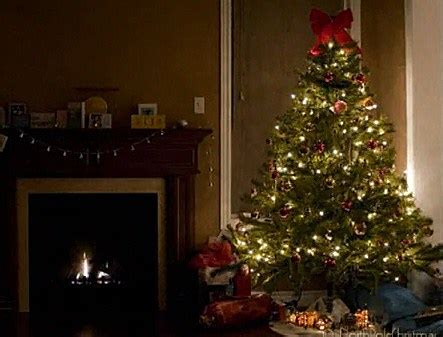 do real christmas trees have bugs how many bugs are living in your tree