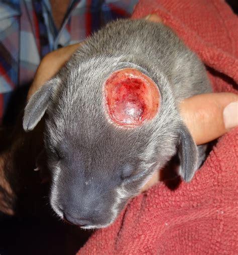 puppy monkey monkey newborn puppy with a deformity of hearts