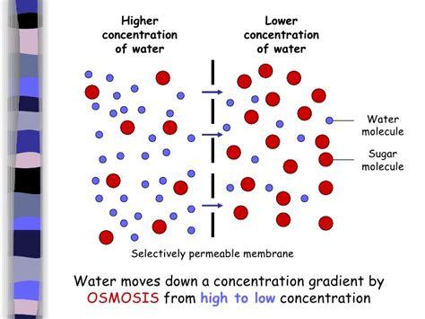 osmosis diagram b diffusion and osmosis
