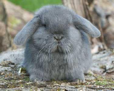 b07csr31fb la tete du lapin bleu adopter un lapin vos exp 233 riences vie pratique