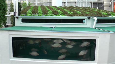backyard aquaculture aquaponics archives organic garden harvest inc