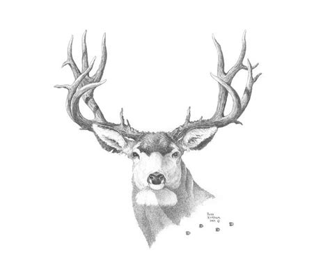 mule deer tattoo designs 85 best pencil images on pencil
