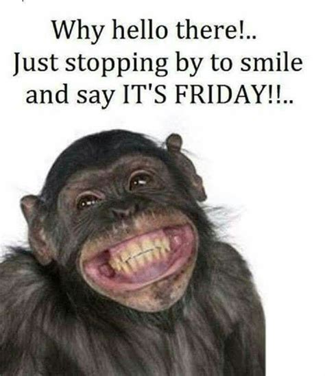 Friday Memes Funny - have a great weekend funny monkey foto bugil bokep 2017