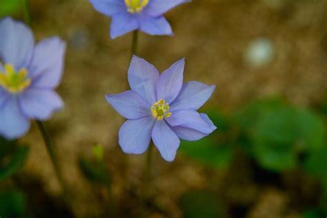 Korean Floral Doormatekarpet Square 1 gratis stock foto s rgbstock gratis afbeeldingen zuid korea inheemse bloemen kk