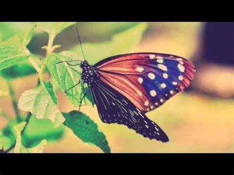 Pengorbanan Seekor Kupu Kupu puisi kisah kupu kupu oleh ersta andantino