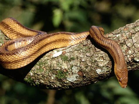 imagenes asombrosas de serpientes idool fotos de serpientes v 237 voras y culebras 7 ofidios